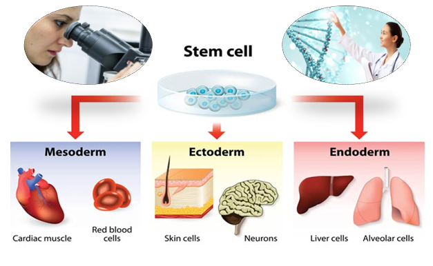 Stem Cell Treatment in India