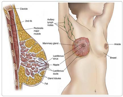 Breast Cancer Surgery in India