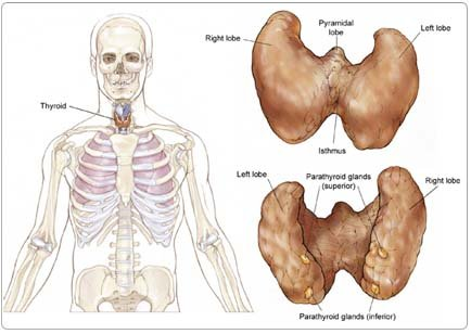 Parathyroid Tumor Surgery in India