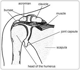 Shoulder Arthroscopy Surgery in India