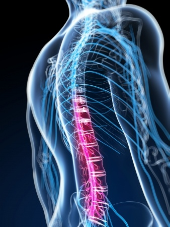 Cb Eeee C B Bee Spinal Nerve Neuropathic Pain additionally Meninges The Brain And Spinal Cord Are Surrounded By Three Connective Tissue Membranes C The Meninges Singular C Meninx further Nanobiotechnology Its Application further Paraplegia likewise Anatomy Spine Three Main Functions To Protect The Spinal Cord. on spinal cord injury functions